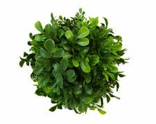 Fiori secchi e piante finte cespugli verde per la decorazione della casa