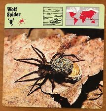 """""""Wolf Spider"""", 1977 Editions Recontre Collectible 4 3/4"""" x 4 3/4"""" Card"""