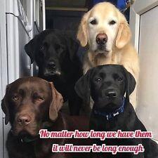 """Labrador dog refrigerator magnet 3 1/2 X3 1/2 """""""