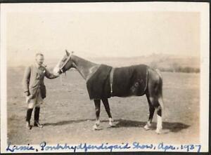 WALES PONTRHYDFENDIGAID SHOW - LASSIE THE HORSE 1937 PHOTOGRAPH