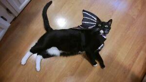 medium size pet dog cat costume black bat wings harness