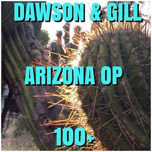 Echinopsis   -  ARIZONA  OP.   100+   Dawsons & Gill.     Cactus.