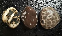 Lot 3 Ancient Michigan Great Lakes Sampler w/ Petoskey Stone natural unpolished