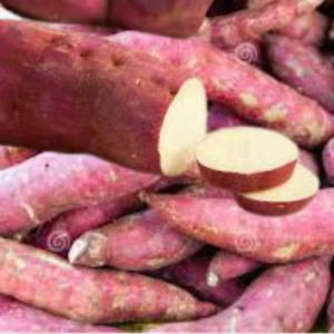 20 fresh sweet potato plant vine cuttings slips