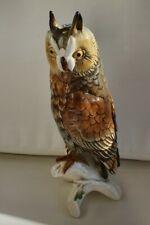 Karl ens germany Large Long Eared Owl
