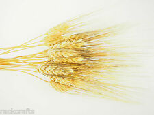 Large Dried Wheat Bunches Bundles Sheaves Vase Filler Home Decor Wedding Floral