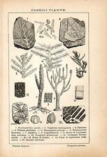 Stampa antica PIANTE FOSSILI paleontologia 1910 Old antique print