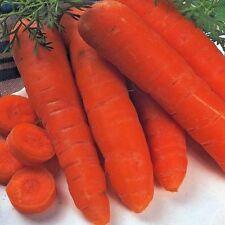 Vegetal Zanahoria Otoño Rey 2-5000+Semillas