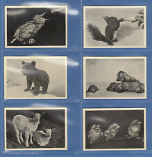 TRUMPF  CHOCOLATE  OF  GERMANY  - SET OF 6 CUTE ANIMALS CARDS  -  C 1930's