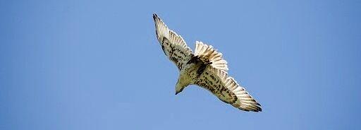 Falcon's Findings