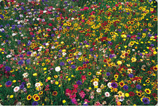 wildflower mix, WILD FLOWER 100% seed, 5 lbs. pounds, SEEDS! GroCo