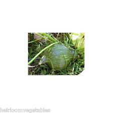 30 True Green Hubbard Winter Squash seeds. HEIRLOOM. ***SAME DAY SHIPPING***