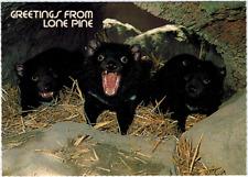 Tasmanian Devil on Guard, Lone Pine Australia Sanctuary Unposted Post Card