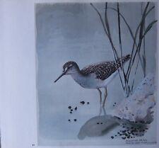 Beau Tunnicliffe Oiseau Imprimé ~ Bois Sandpiper
