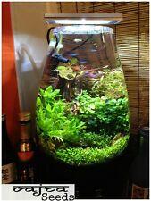 Aquarium Plants & Grass Seeds☆Water Grasses Random Aquatic Plants☆200 Pcs Pack