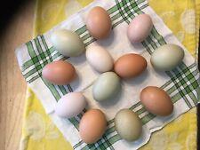 12 Fertile Farm Eggs-Assorted Colors-Chicken Hatching Eggs-My Best Barn Yard Mix