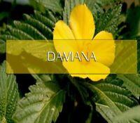 Damiana Capsules 100% Organic Dr Sebi All Natural Damiana Leaf Powder