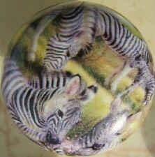 Ceramic Knobs W/ Zebra Family Knob African Wildlife