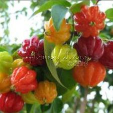 20 Scotch Bonnet Pepper Seeds High Germination Health TT245