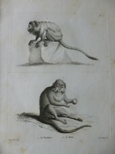 GRAVURE XVIIIe SUR CUIVRE / MARIKINA - LE MONE