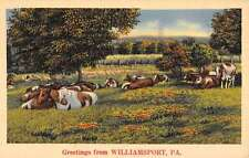 Williamsport Pennsylvania Cow Pasture Greetings Antique Postcard K55980