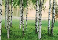 Big wallpaper for interior walls White birch trees Forest Lake photo wall mural