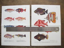 George Coates  - 2x Vintage Australian Tropical Fishes Illustrated Plates