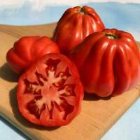 Tomate Canestrino De La Toscana - 100 (semillas) seeds - Pomodoro  - Tomato