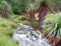 Exot Samen schnellwüchsig Garten Zierpflanze Rarität GRASBAUM
