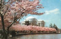 Postcard Jefferson Memorial Amid Cheery Blossoms Washington DC