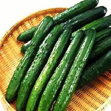 Japanese Heirloom Cucumber Yamato Sanjaku 30 Seeds My Organic Garden Japan Seeds