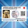 ASSISTANCE DOG UK - SERVICE ID BADGE FOR UNITED KINGDOM GREAT BRITAIN AREA ADi