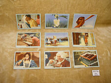 COLLECTION - 9 ENGLISH SCOTTISH CWS ROSE OF THE ORIENT 2ND FILM SERIES TEA CARDS