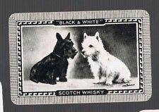 Playing Swap Cards 1 VINT  BLACK & WHITE WHISKY ADVT BLACK & W  SCOTTY DOGS  D37
