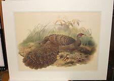 "H.S. CROCKER ""GERMAN PEACOCK"" HAND COLORED ENGRAVING UNSIGNED"