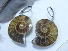Ammonit Fossil Naturstein Ohrringe Ohrhänger 31,5 x 26 mm m. Edelstahl Brisuren