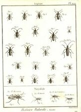"""""""LEPTURE Pl 221"""" Rare Insects by Bernard Direxit - 1797"""