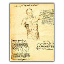 METAL SIGN WALL PLAQUE MUSCLES HUMAN BODY TORSO Vintage Print Surgery/Doctor