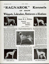WHIPPET LABRADOR RETRIEVER OUR DOGS OLD 1945 DOG BREED KENNEL ADVERT PRINT PAGE