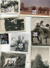 Lot of 12 Vintage 1950s Photos The Wild Ones -7 pt Reindeer; Bronco with Lady