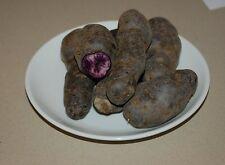 Gourmet Kartoffel Vitelotte blaue Trüffelkartoffel 5 Stk Saatgut Pflanzkartoffel