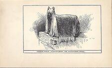 1900 Uk Dog Art Pen & Ink Print R Moore Yorkshire Terrier Named Ch. Ashton Queen