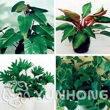 bonsai seed Garden-Plant X8N6 F9P0 prunus mume 10x Seeds RED PRUNUS