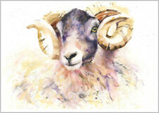 HELEN ROSE Limited Print of my BLACK FACE SHEEP RAM watercolour 425