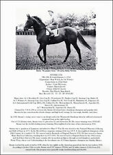 Race horse STYMIE Thoroughbred picture biography unique collectible