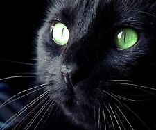 BLACK CAT FACE COMPUTER MOUSE PAD 9 X 7