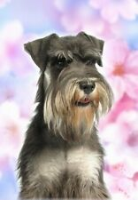Miniature Schnauzer A6 Blank Card No 16 By Starprint