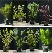PLANTA DE ACUARIO: LOTE DE 8 PLANTAS.SE PUEDE ELEGIR LAS PLANTAS Y COMBINACIONES