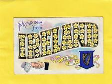 PRIMROSES  from    IRELAND  ,  ( 11g )