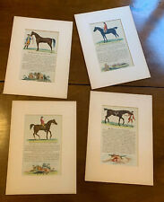 4 Stampe Originali Inglesi antiche - Cavalli Famosi